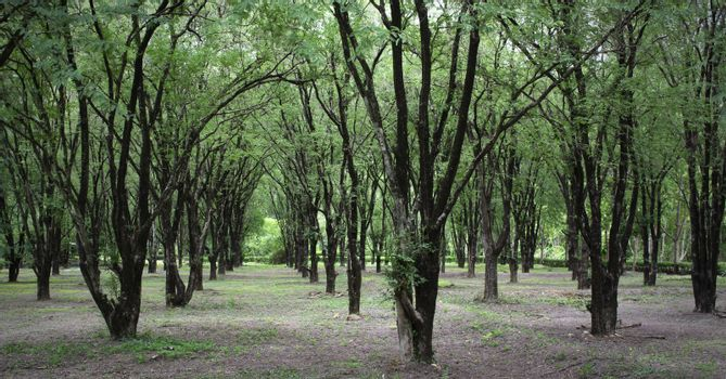Forestry plantations increase green space.
