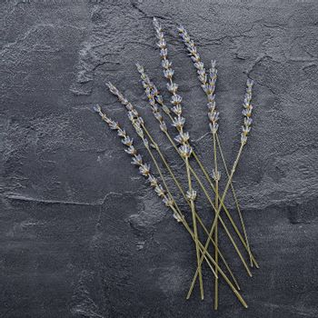 Violet lavender flowers on dark concrete background.   Dry lavender flowers flat lay and copy space.