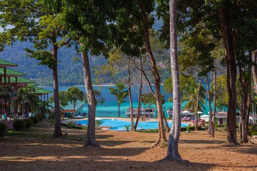 tree with clear sky behind beach in Tropicana country location at south of Thailand