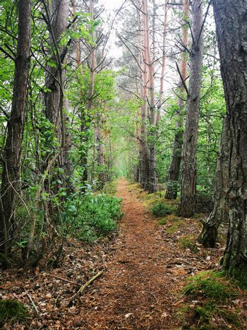 Fantastic forest paths through the nature reserve Pfrunger-Burgweiler Ried, Upper Swabia, Germany
