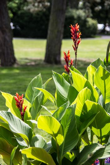 herbaceous flowers in the park