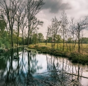Wet forest with a small temporary pond in bad weather, Germany