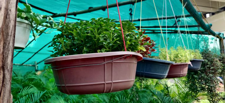 Hanging plant pot in plant nursery in New Delhi, India