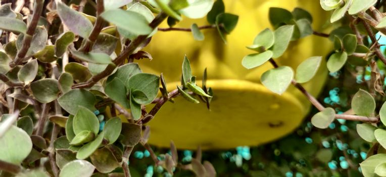 Close up of a small green leaf with yellow background