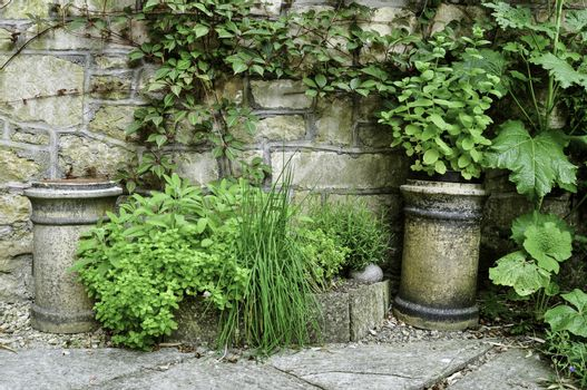 An arrangement of a variety of stone pots and planters with herbs and trailling ivy. In a walled  cottage garden setting.