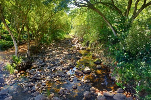 Mountain river or stream at Waimea state park, Oahu, Hawaii