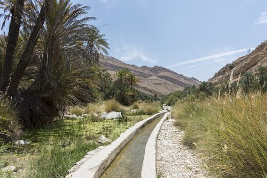 Water canal coming from a river and passing thru a garden and palm trees farm. Wadi Bani Khalid, Sultanate of Oman