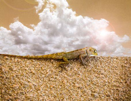 Lizard on sandstone