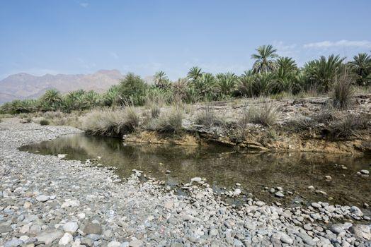 Palm groove near a river and mountain, Al Mazari (village beside Wadi Dayqah Dam), Sultanate of Oman,