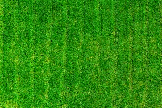 Green grass field background. View from the top