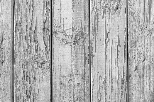 Monochrome texture of a board with peeling paint. Abstract background for design.