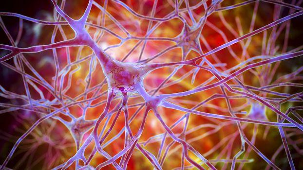 Pyramidal neurons of the human brain cortex, 3D illustration