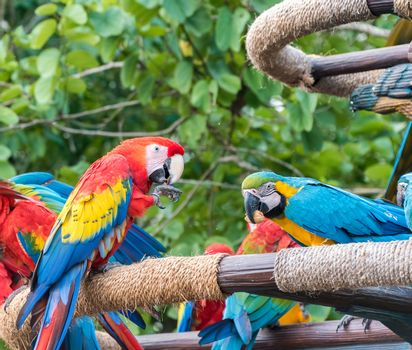 bright and colourful macaw birds