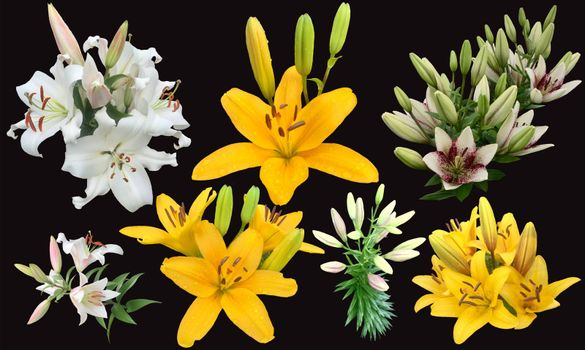 Collection of Lily flowers yellow and white colors on black background. Set of beautiful Bunch of flowers.
