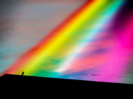 rainbow of god from heaven to bird on roof
