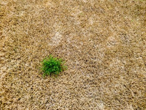 green grass survival amount brown dry the grass