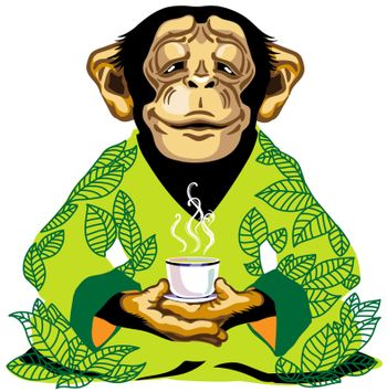 cartoon chimp great ape or chimpanzee monkey wearing kimono robe with green tea leaves, sitting in lotus yoga pose and holding a cup of tea. Spiritual harmony and peaceful emotion. Front view. Isolated vector illustration