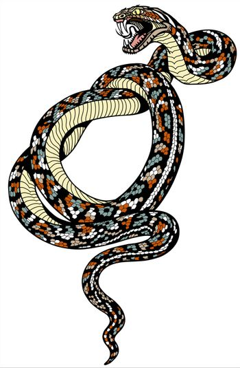 coiled snake tattoo