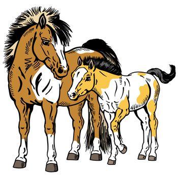 Shetland pony mare with foal