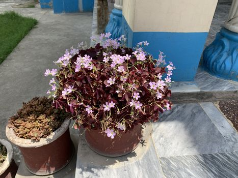 closer  look at tthe pink flowers in the pot