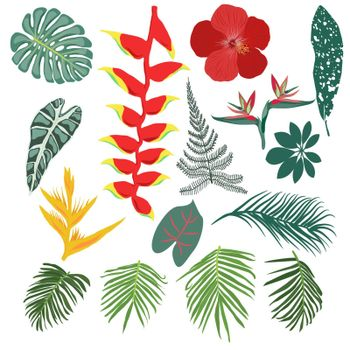Vector Tropical jungle leaves and flowers collection on white background.