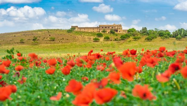 View of red poppy flowers field landscape, blue cloudy sky and mediterranean house