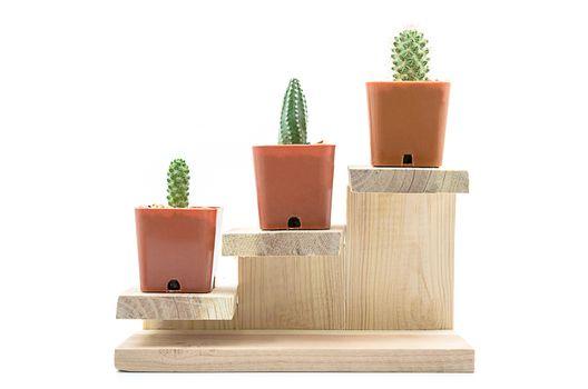 Step to grow up of Cactus.