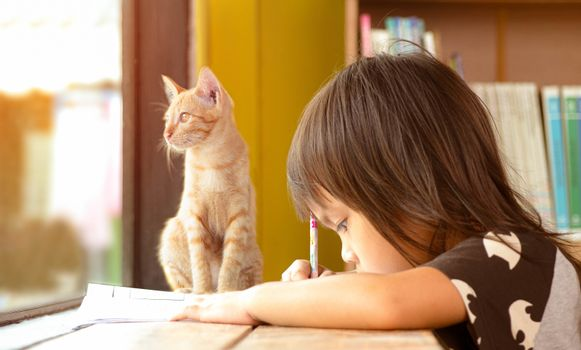 Educate at home. Asian little child girl doing homework by the window indoors on the weekend with the kitten sat beside her. Cute pet concept. Back to school.