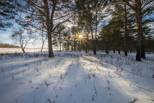 Scene of a beautiful sunset at field with pines and birches at winter season