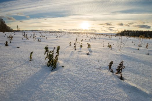 Scene of a beautiful sunset at field covered with snow with trees at winter season