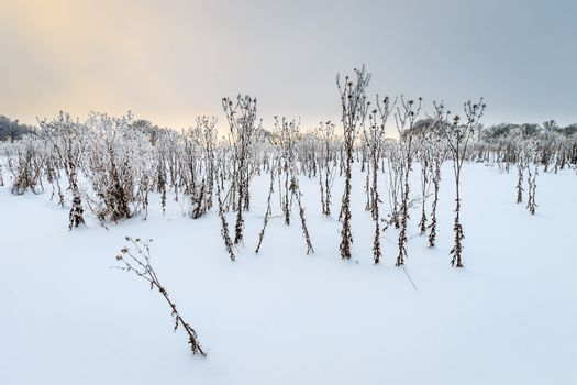 Landscape of branches covered with frost at winter season at field