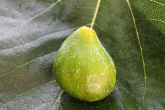 Fig on fig leaf background