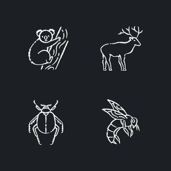 Mammals and insects chalk white icons set on black background
