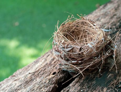 Empty bird nest on a branch of a tree. Leaving home concept.