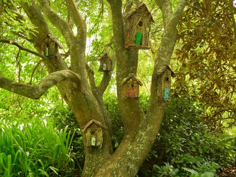 An old tree, bird houses, forest or park, green scene.
