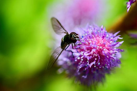 Hoverfly - a fly which frequently hovers motionless in the air and feeds on the nectar of flowers.
