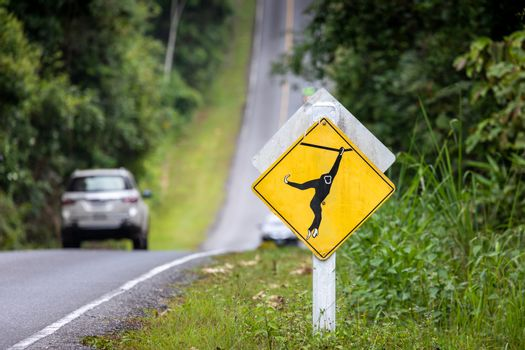 Yellow road sign on hill slope for careful driving and awaring monkey and other animals on roadway with blurry driving car inside tropical rainforest.