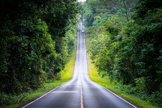 Straight roadway on hill slope of mountain inside tropical rainforest alongside covering by green trees and bushes.