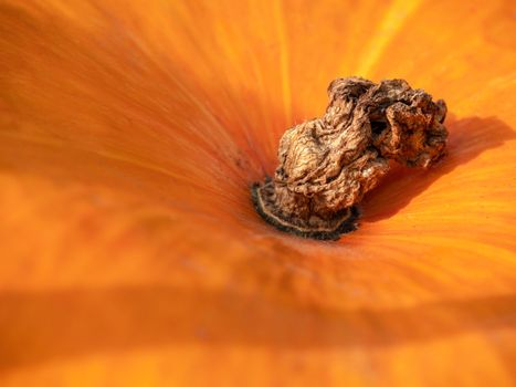 Abstract Textured Background of a Pumpkin. Orange pumpkin texture. Close up of pumpkin texture. Pumpkin skin.