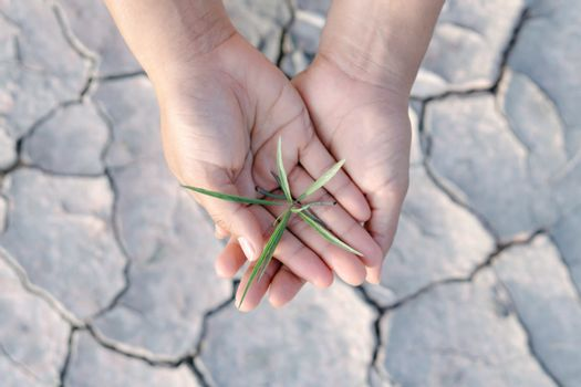 Woman hand holding seedlings are growing from arid soil with mor