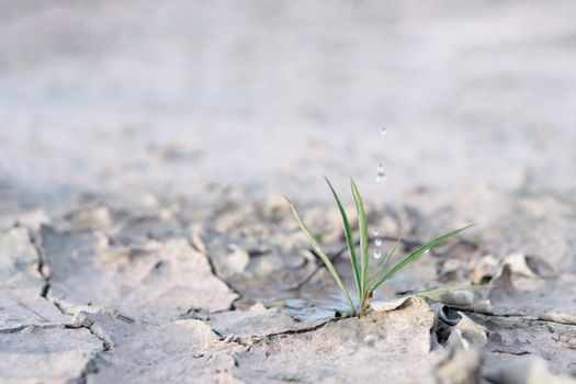 Watering  seedlings are growing from arid soil with morning sun