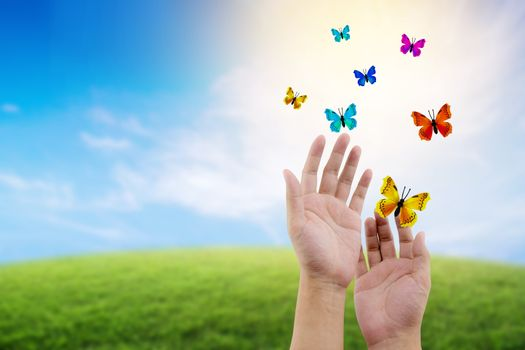 butterfly flying outdoors on a beautiful nature with freedom env