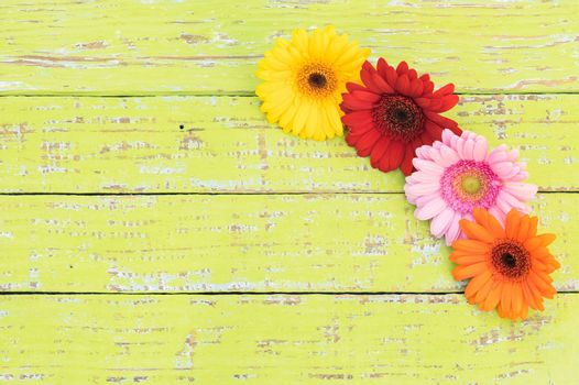 Beautiful multi-colored gerbera flowers on wooden table with copy space, top view