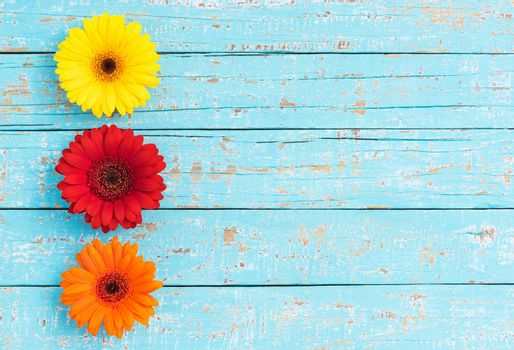Gerbera flowers frame on light blue wooden background with copy space