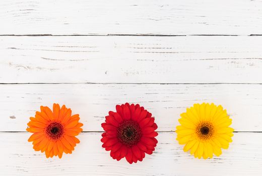Colorful gerbera flowers on white wooden table background, top view, copy space