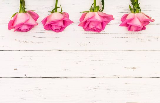 Beautiful fresh pink roses on white wooden background with copy space