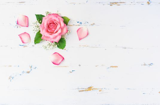 Romantic pink rose flower with petals decoration on white wood with copy space