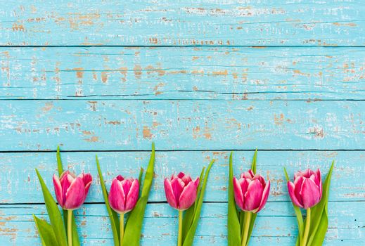 Fresh pink tulips arranged on turquoise wooden background
