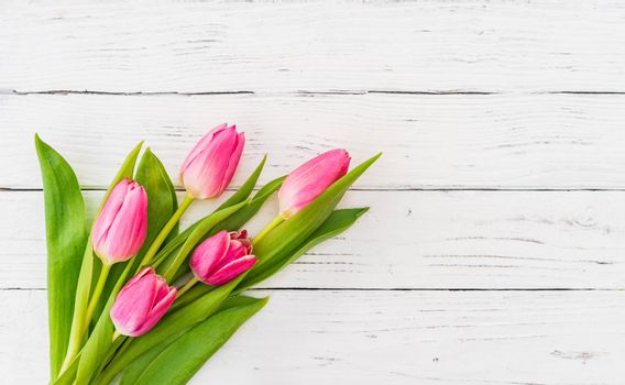 Pink tulip flowers on white background with copy space