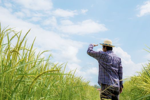 Farmer in rice field with the blue sky.